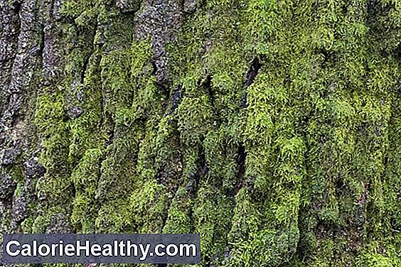 Pine bark in psoriasis and hypertension