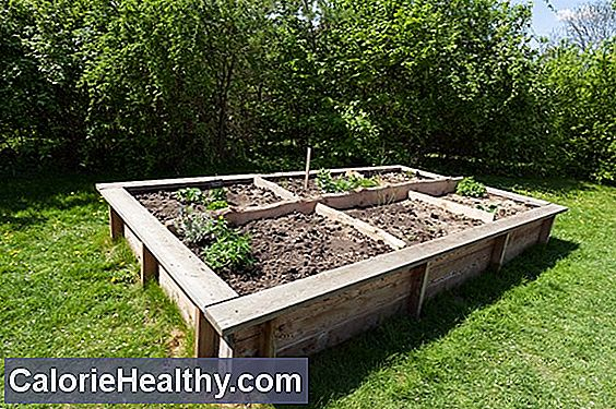 Grow organic vegetables yourself - for beginners